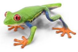 tree-frog-5