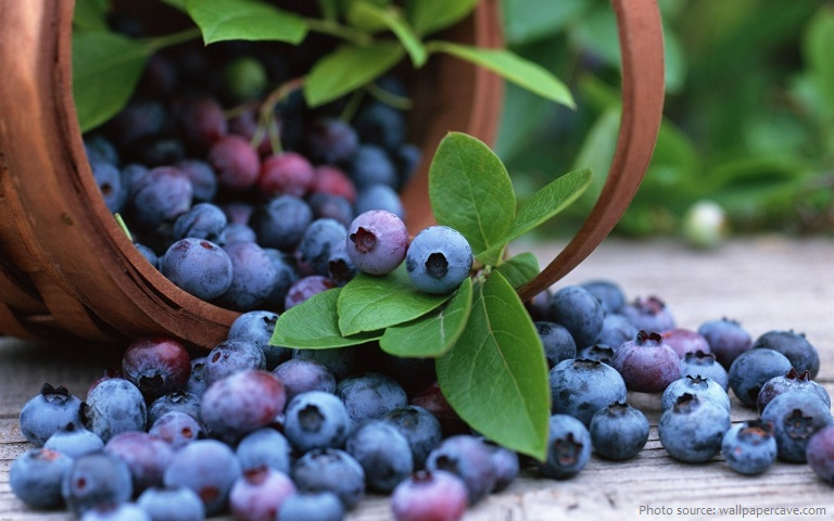 bilberries-2
