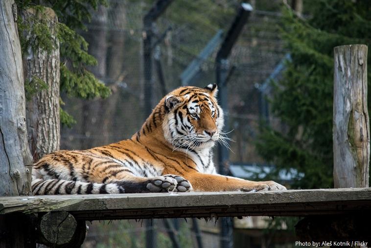 ljubljana zoo