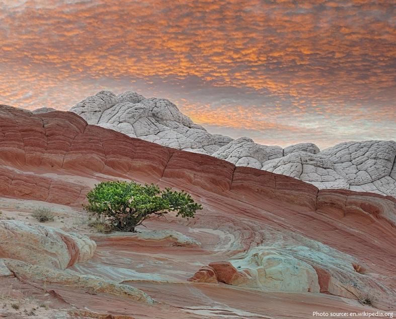 painted-desert-2