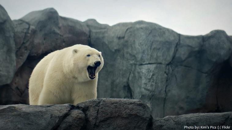 assiniboin park zoo