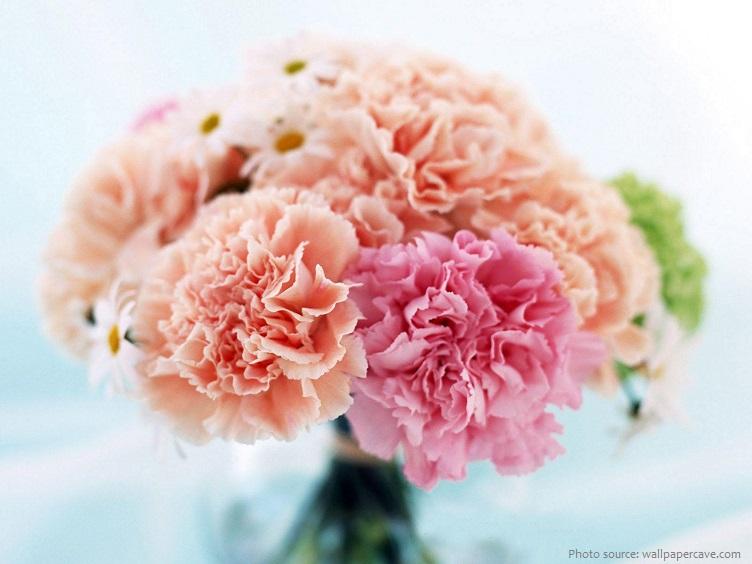 carnation-4