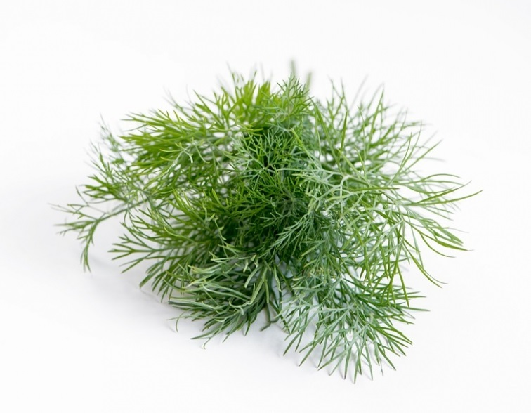 dill-2