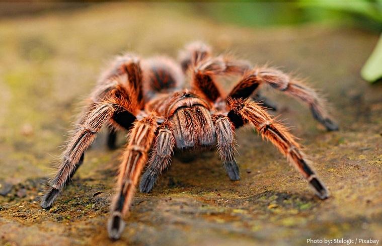 tarantula-3