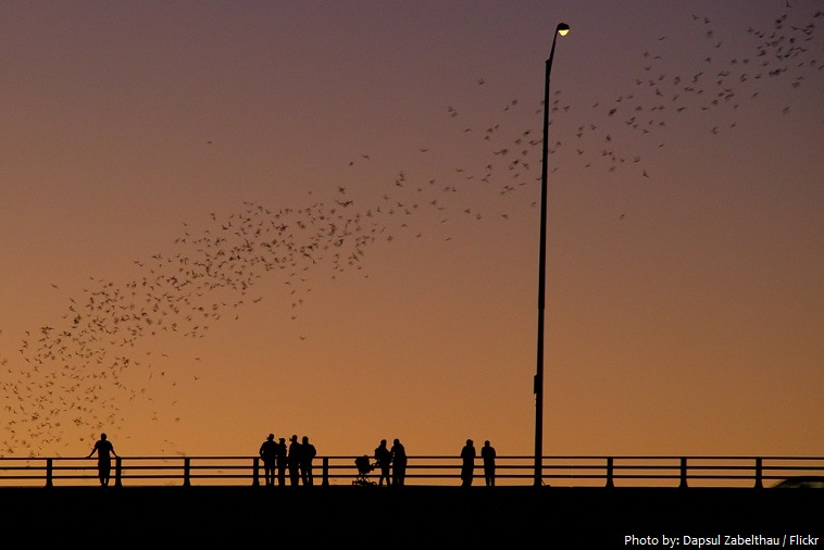 ann w richards congress avenue bridge bats
