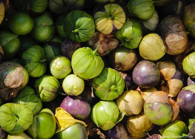 tomatillo-4