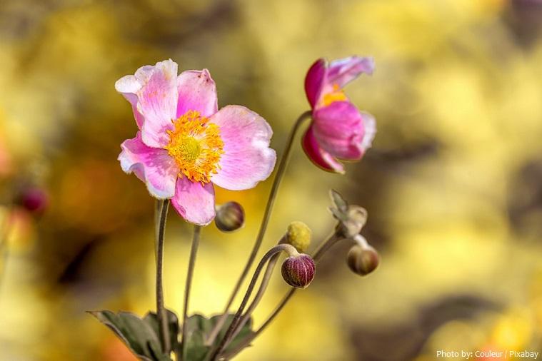 anemones-2