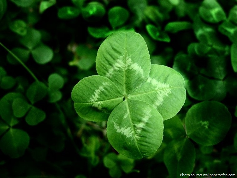 clover four leaves