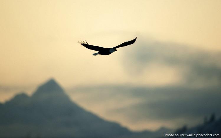 sea-eagle-2