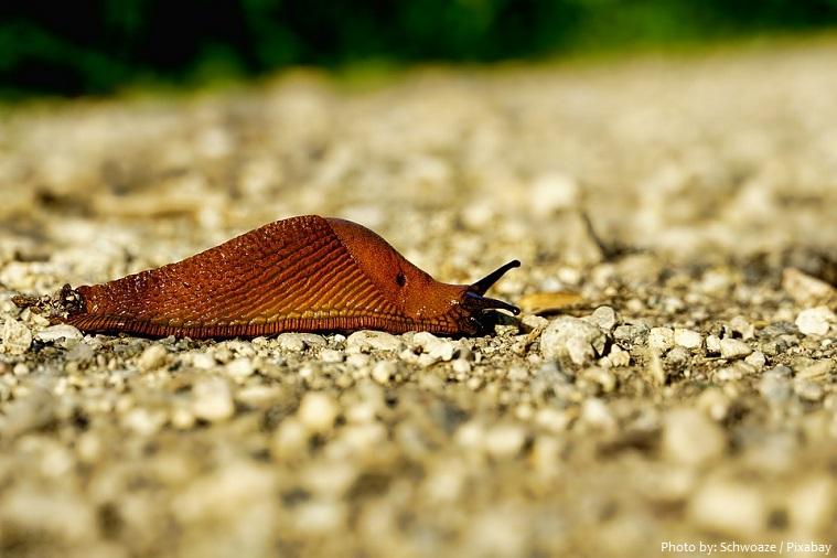 slug-2