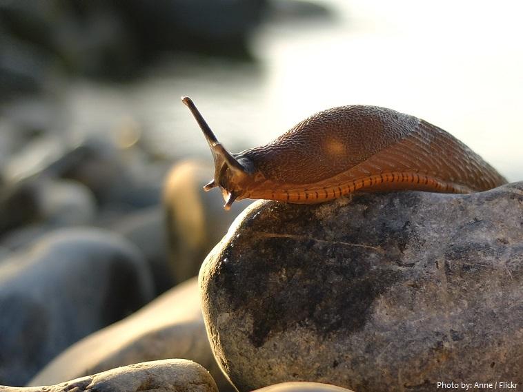 slug-3