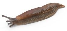 slug-5