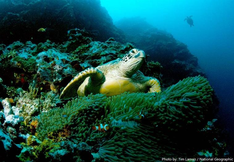 green-sea-turtle-3