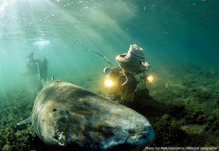 greenland-shark-3