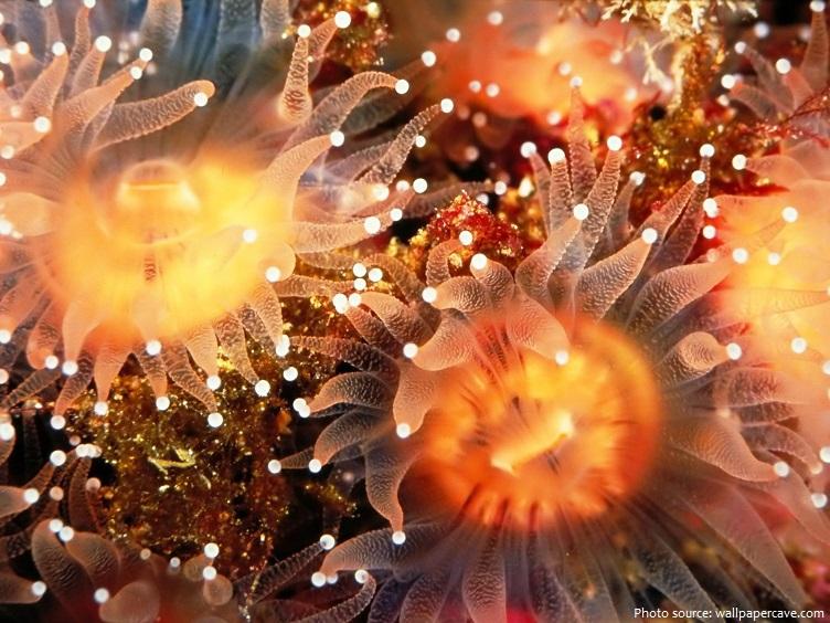 sea-anemones-2