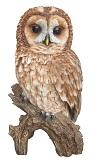 tawny-owl-7