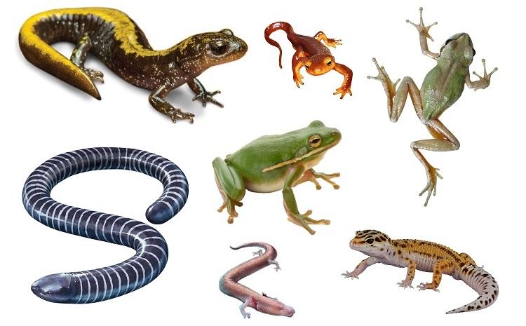 amphibians-2