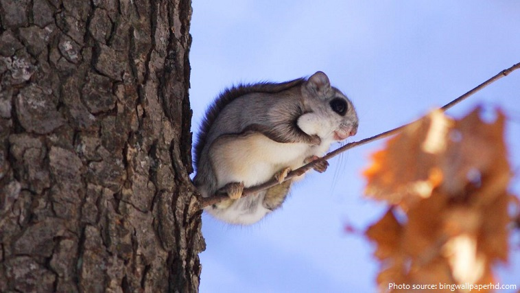 flying-squirrel-2