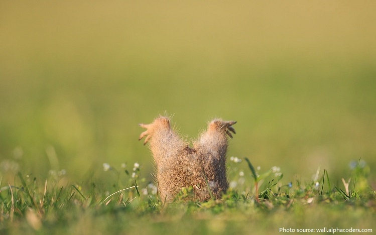 ground-squirrel-2