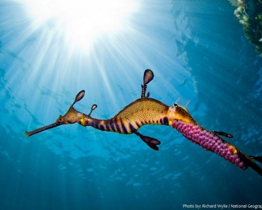 common-seadragon-5