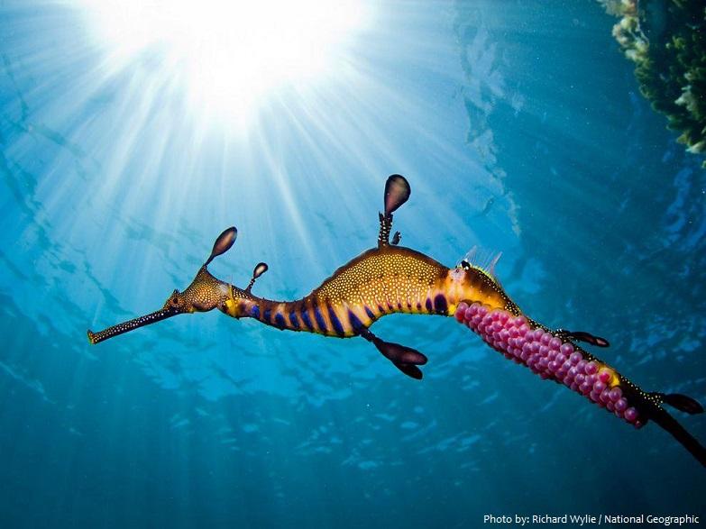 common-seadragon-5