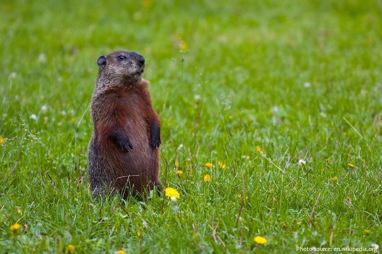 groundhog-4