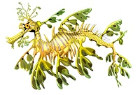 leafy-seadragon-6