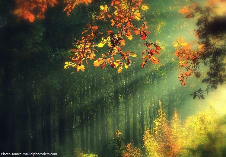 deciduous-forest-2