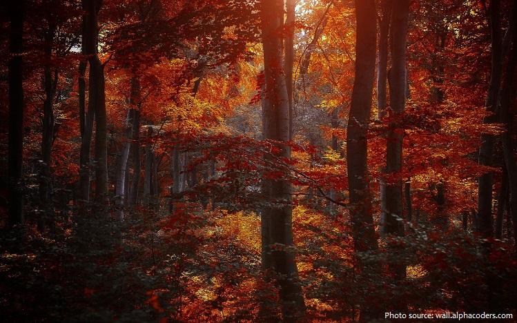 deciduous-forest-3