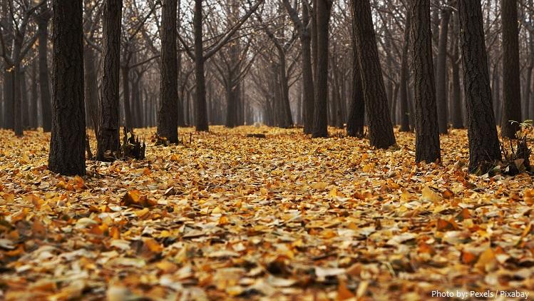 deciduous-forest-5