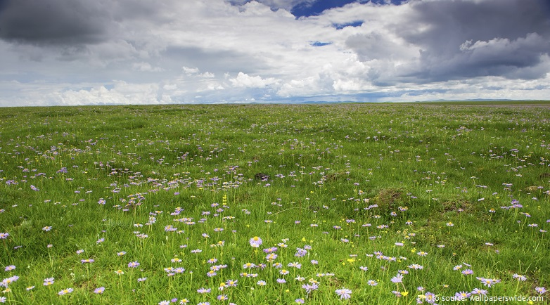 grassland-2
