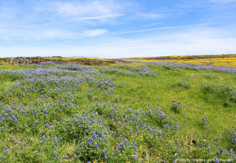 grassland-3