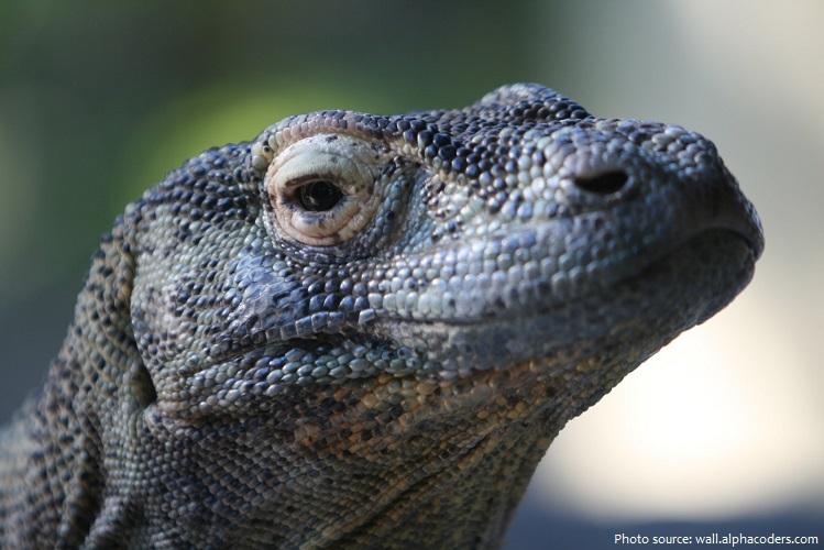 reptile-2