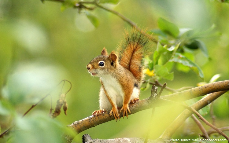 tree-squirrel-2