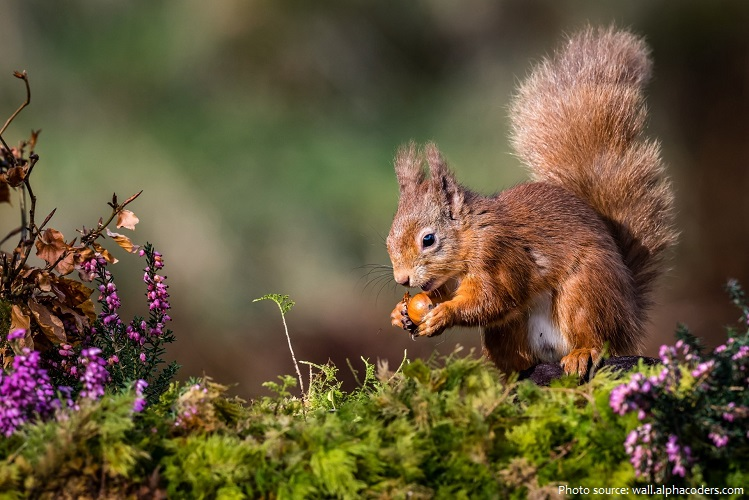 tree-squirrel-3
