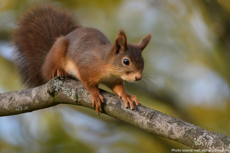 tree-squirrel-4