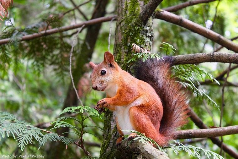 tree-squirrel-5