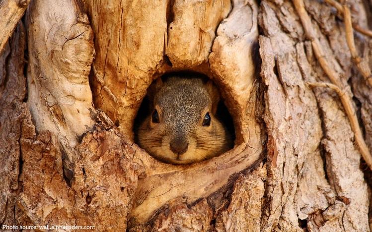 tree-squirrel-7