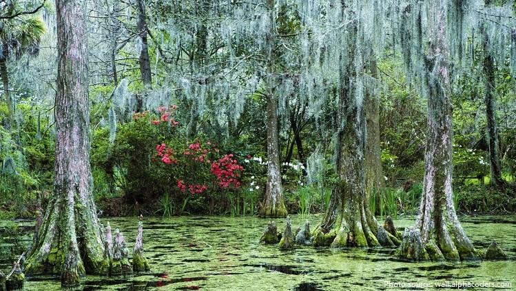 swamp-3