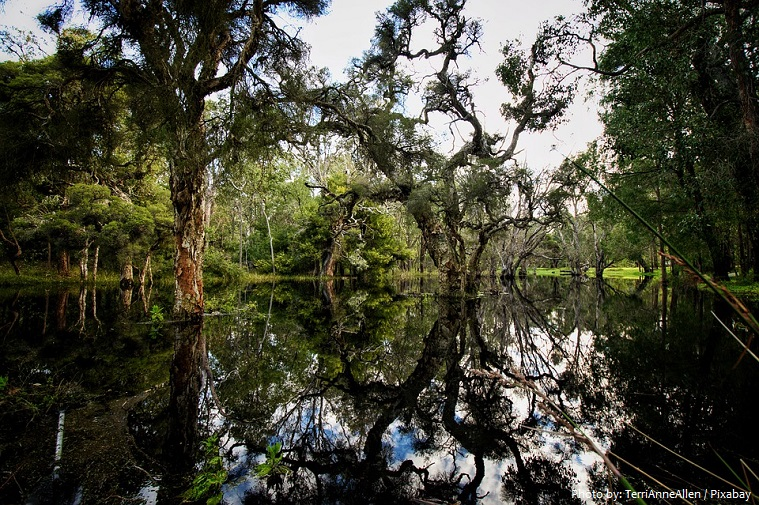 swamp-5