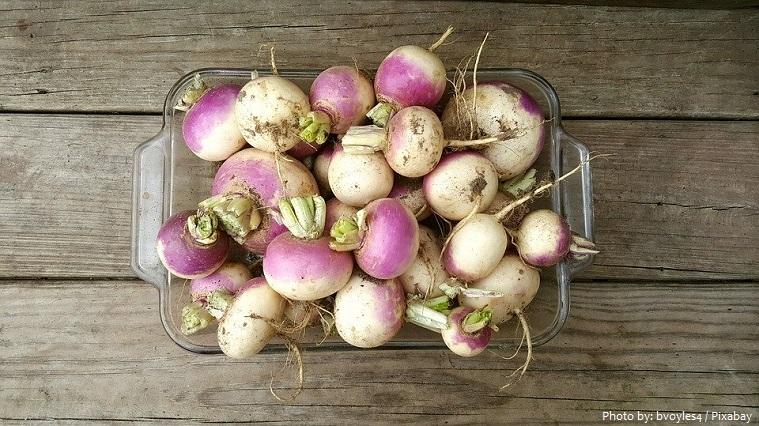 turnips-3