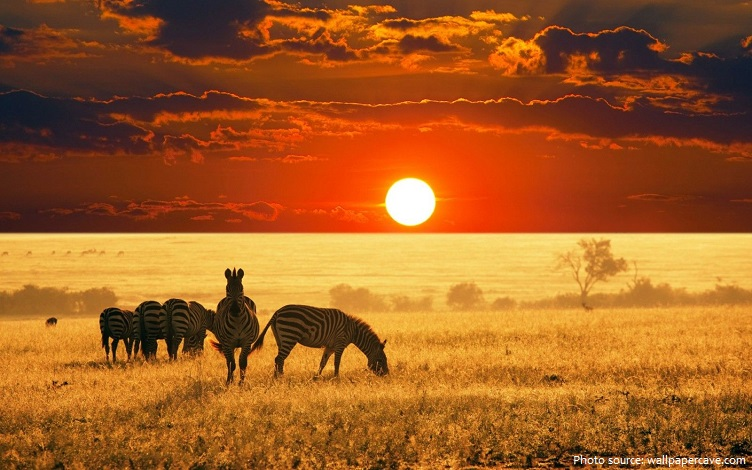 savanna-4