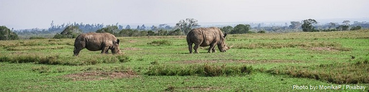 white-rhinoceros-2