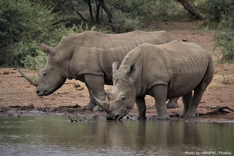 white-rhinoceros-3