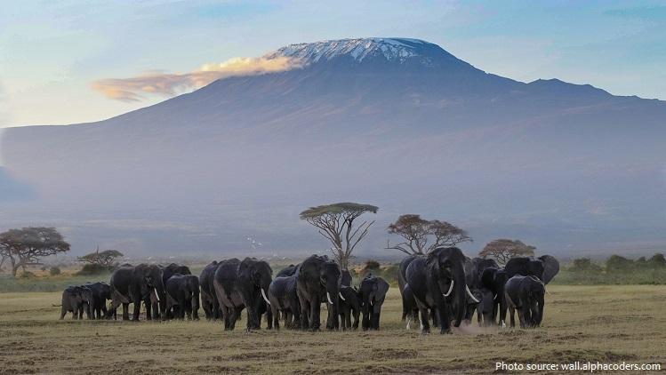 african-bush-elephants-4