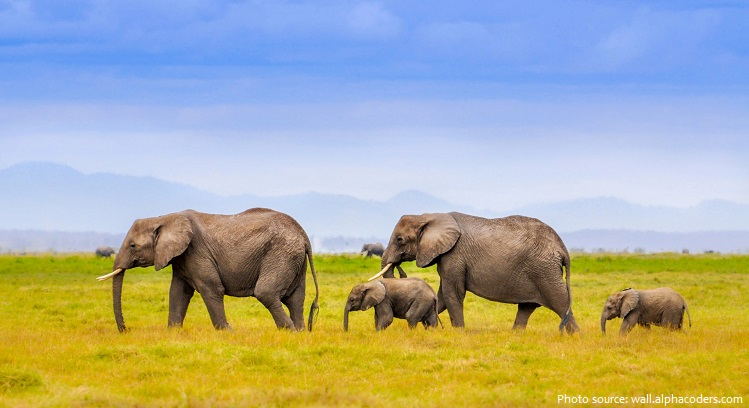 african-bush-elephants-5