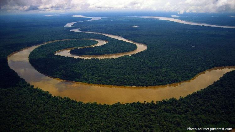 rainforest-4