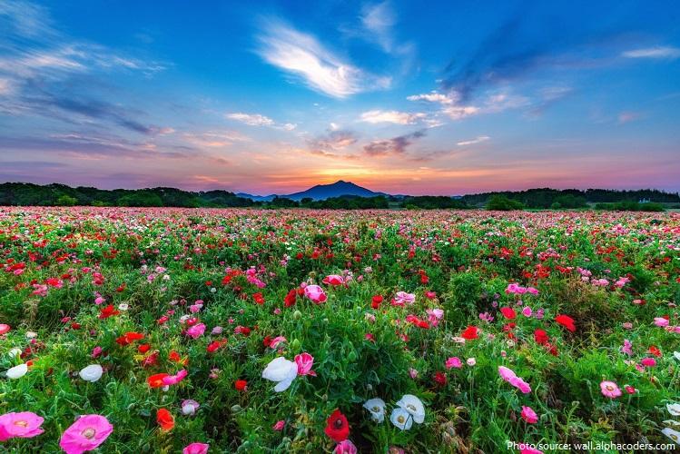 meadow-3