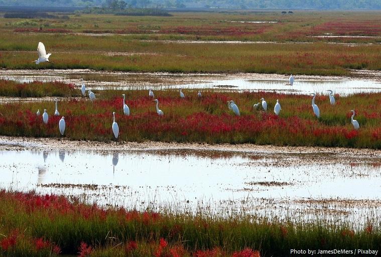 wetland-3