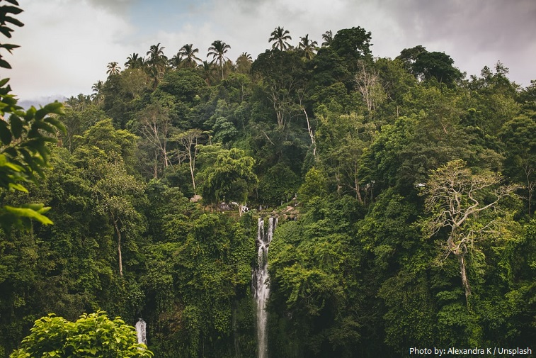 jungle-4